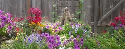 mary-garden-featured-image-resized-copy-.jpeg